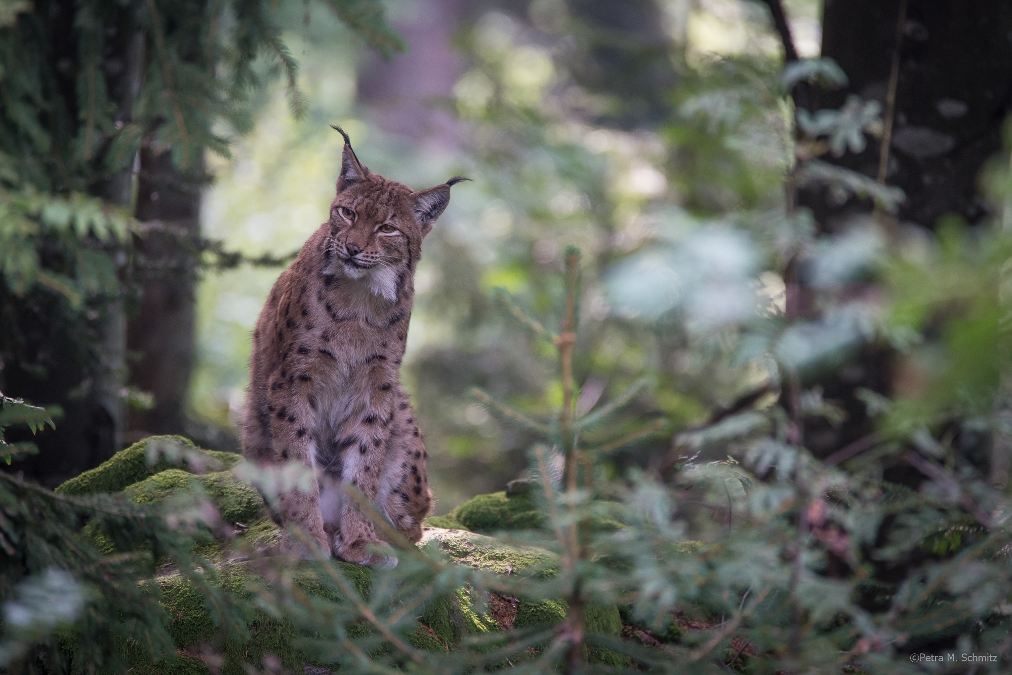 Luchs (1 of 1)